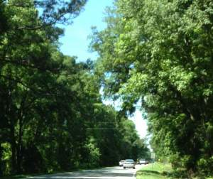 During this stretch, the road to Savannah is untouched from when I was young. Dense trees line either side of the road.