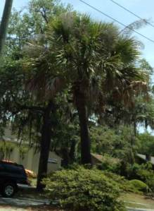 The Victory Drive Palm Trees in Savannah, GA is a three-mile long memorial for the servicemen who fought in World War I.