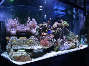 aquarium-tropical-fish-temperature